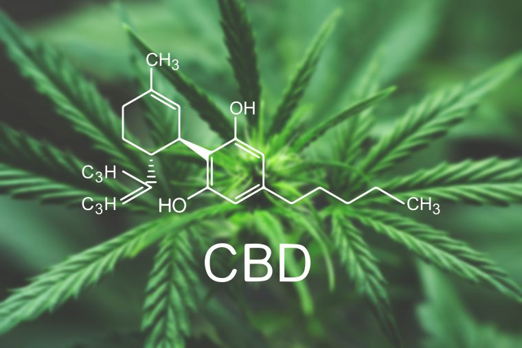 Everything You Should Know About Hemp Flower » Cheaters News